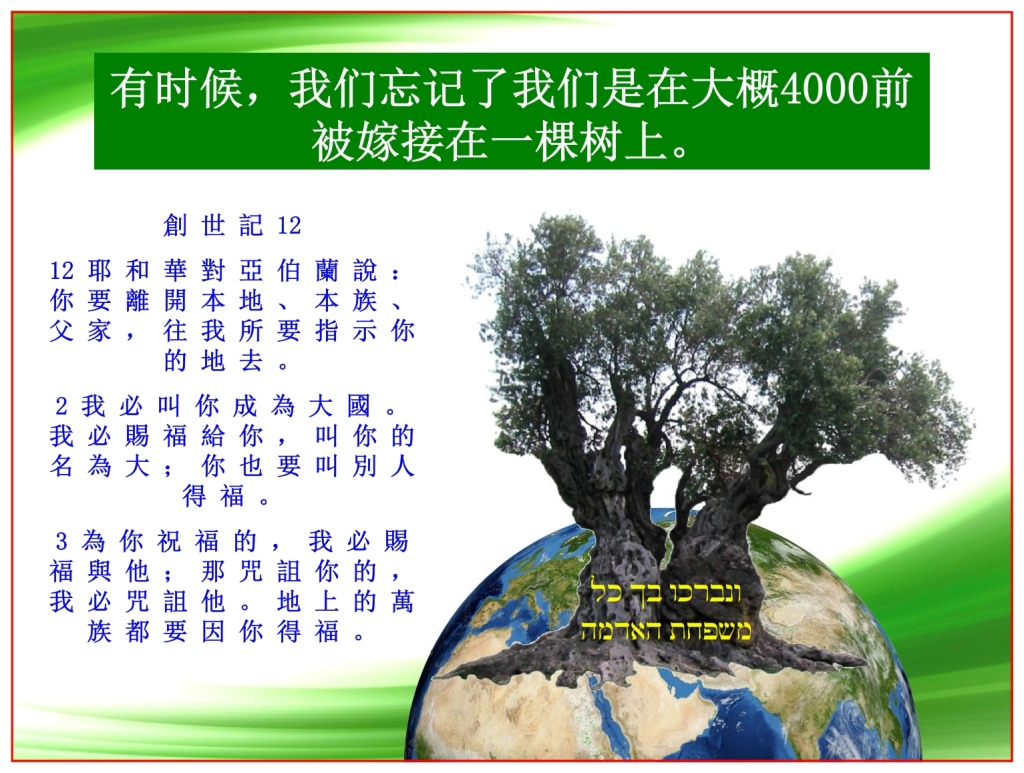Olive tree standing on the Earth showing Genesis 12 Abram's promise Chinese language Bible study