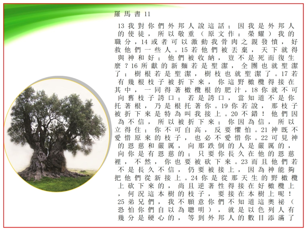 Good Olive Tree showing Romans chapter 11 Chinese language Bible study