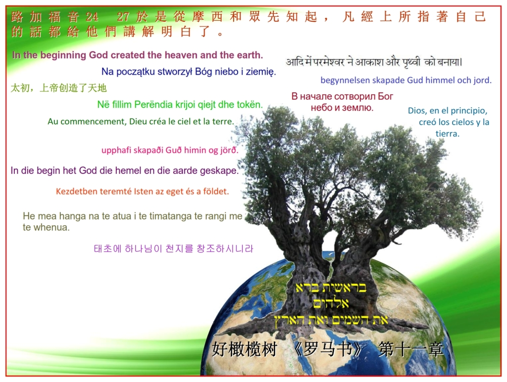 Good Olive Tree blessing the Earth with the Scripture Chinese language Bible study