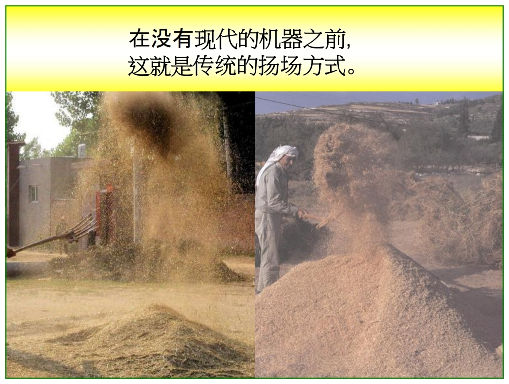 Chinese Language Bible Lesson First Fruits Barley is winnowed after threshing