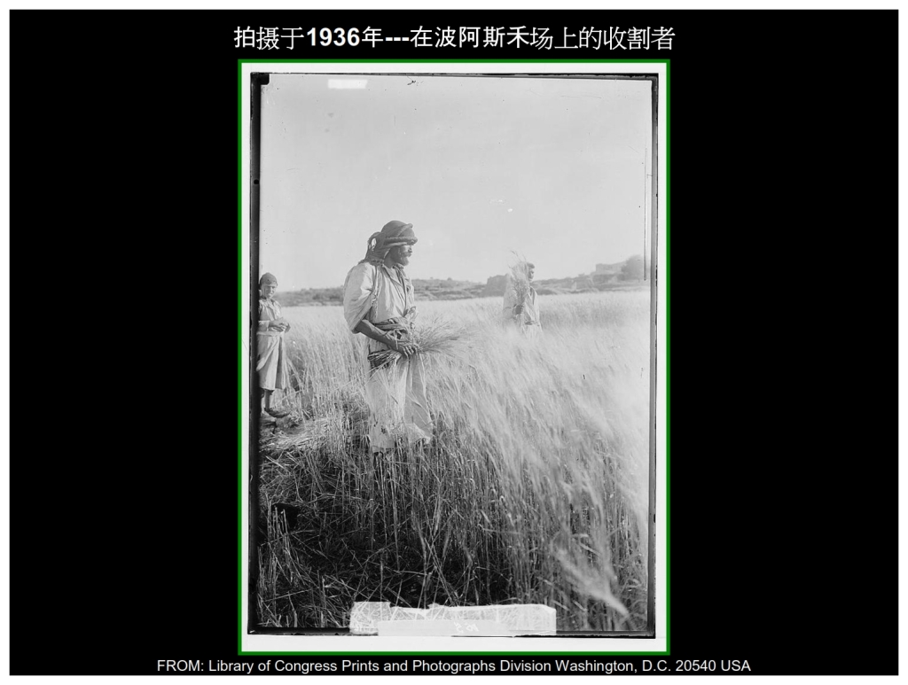 Chinese Language Bible Lesson First Fruits Reapers in Boaz fields 1936