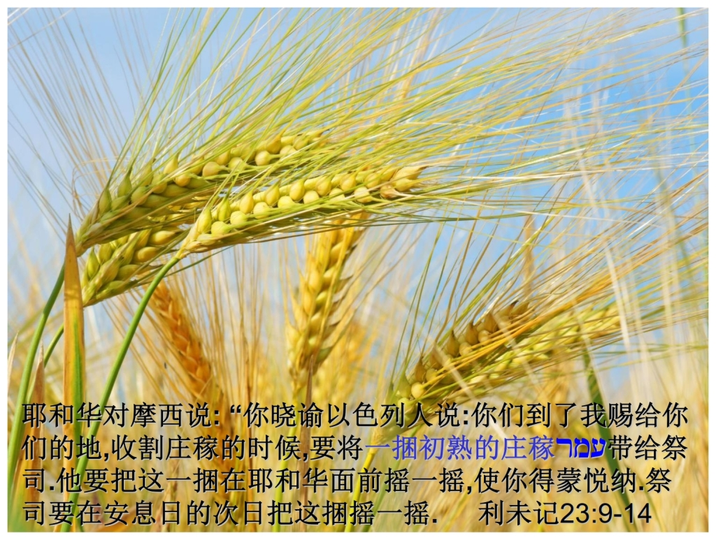 Chinese Language Bible Lesson First Fruits Leviticus 23 the Omer