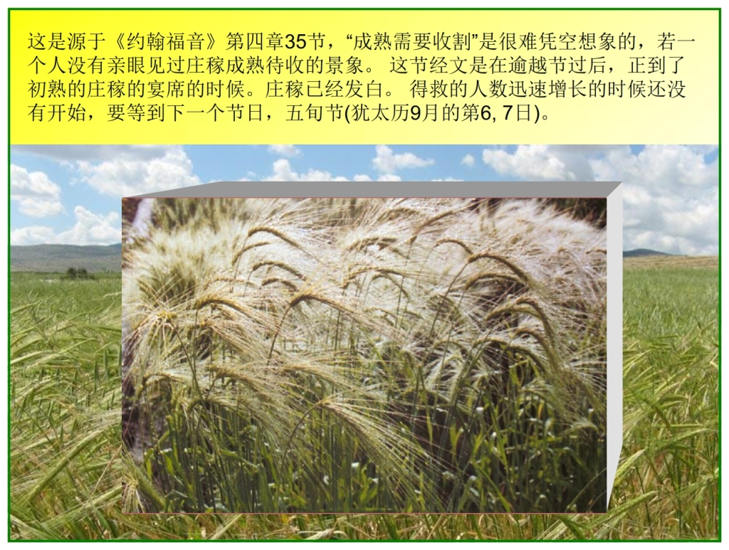 Chinese Language Bible Lesson First Fruits The barley is white unto harvest