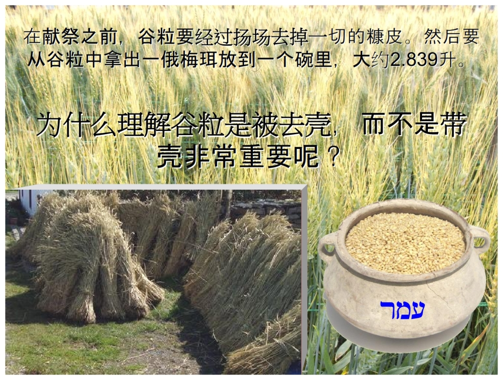 Chinese Language Bible Lesson First Fruits The barley threshed and winnowed