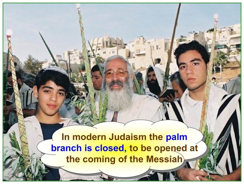 The palm branch is closed awaiting the Messiah