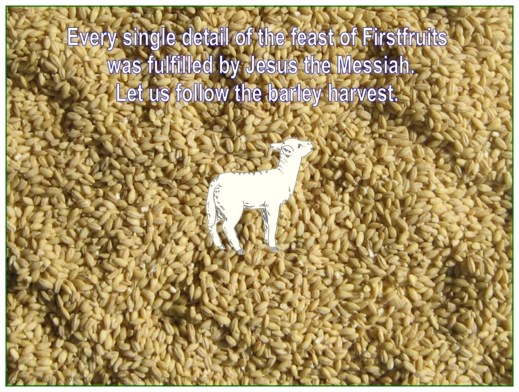 Jesus the Messiah was the lamb sacrifice in the omer presented to the Father.