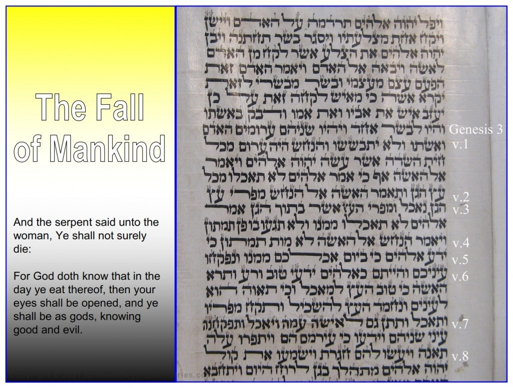 This photograph is from a Torah Scroll showing the verses for the account of the fall of mankind.