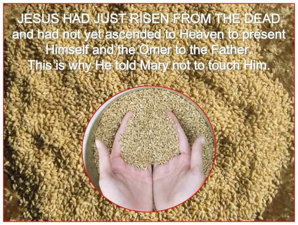 Jesus took the omer to Heaven