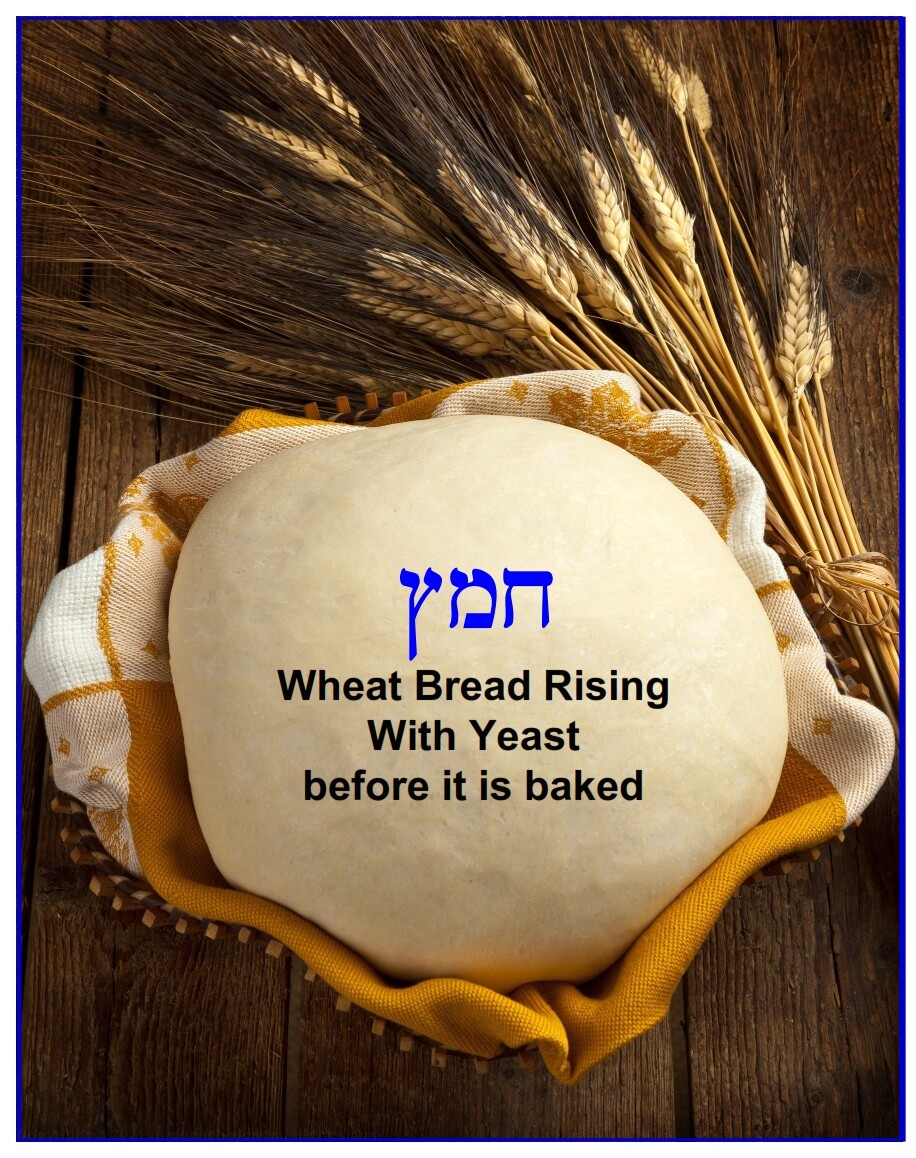 This is wheat dough rising with yeast. In the Hebrew Scripture this is called chametz, or the bread that is forbidden to use during Passover.