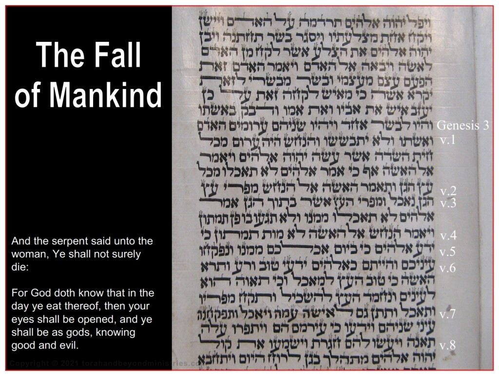 The fall of mankind is seen in this Torah Scroll written in Morocco on goat skin 1800s Genesis 3:1-8.