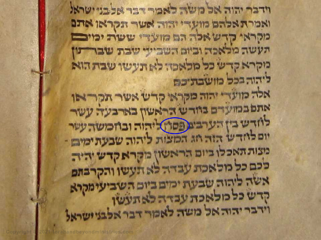 Hebrew scroll from Morocco showing the Hebrew word Passover in Leviticus 23.