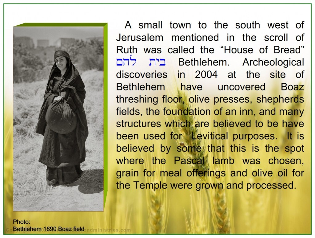Photo 1890 At Bethlehem Judah on the ground where Boaz threshing floor was located, this woman is holding a parcel of threshed, winnowed, barley grain exactly as Ruth did thousands of years ago.