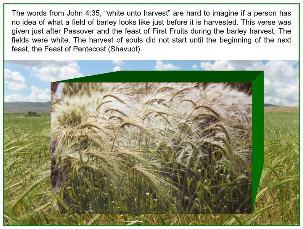"""The words from John 4:35, """"white unto harvest"""" are hard to imagine if a person has no idea of what a field of barley looks"""