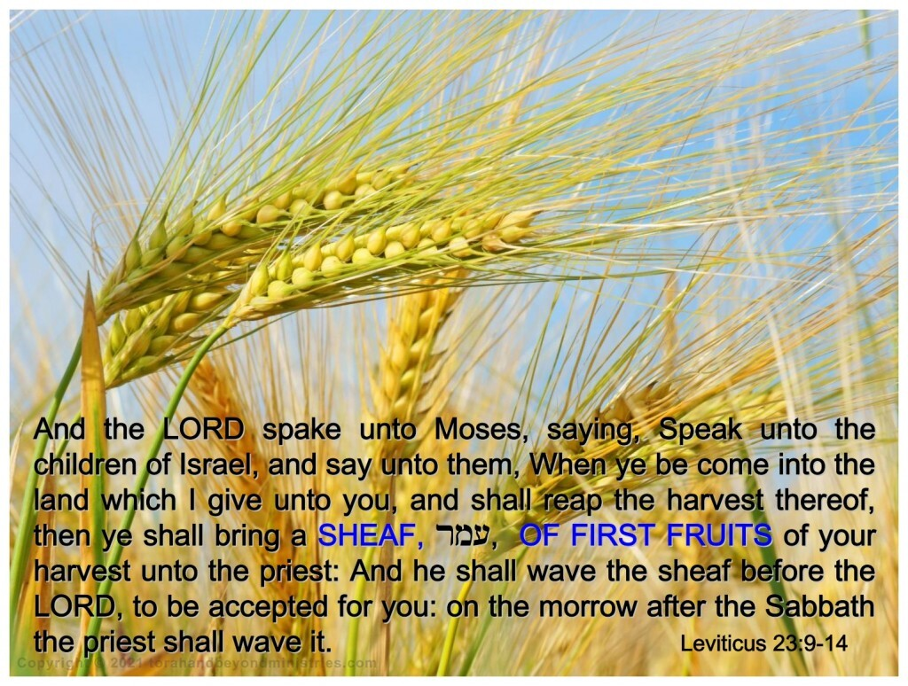 The Feast of First Fruits in Leviticus 23 is centered around the barley harvest