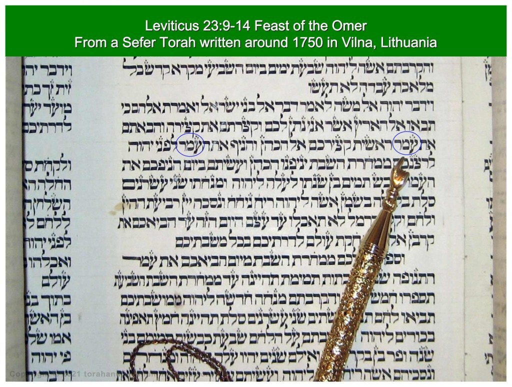 Torah Scroll written in Vilnius, Lithuania around 1750 showing the word omer as the sheaf of Firstfruits