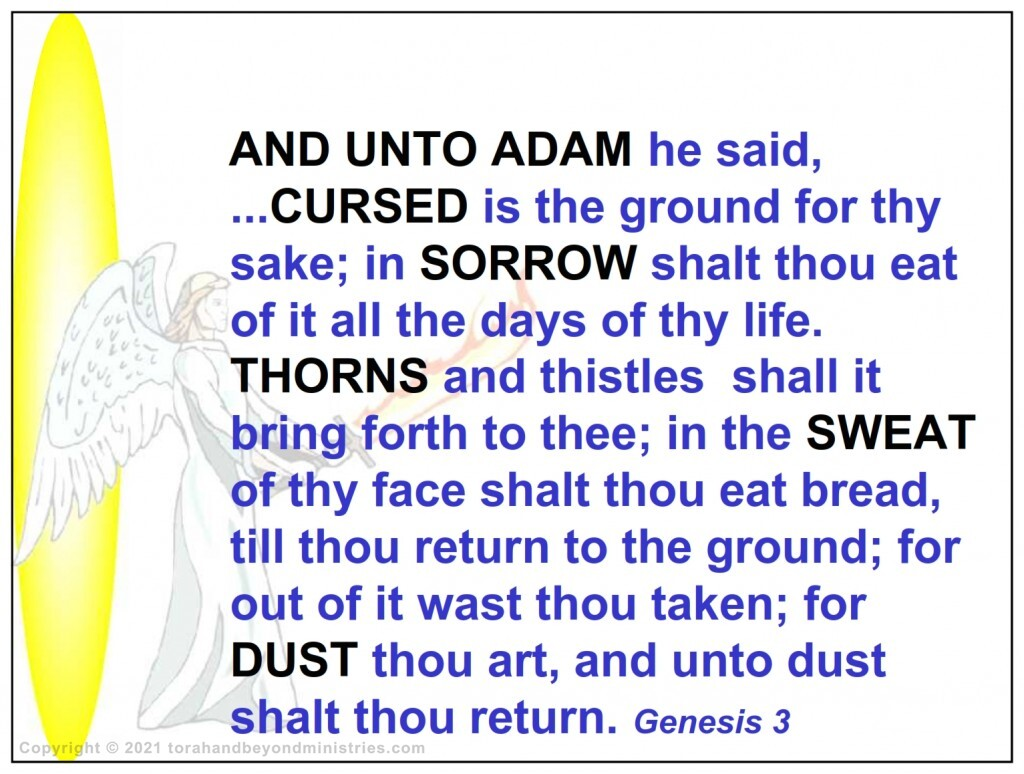 God speaks to Adam and cursed the Earth in Genesis 3