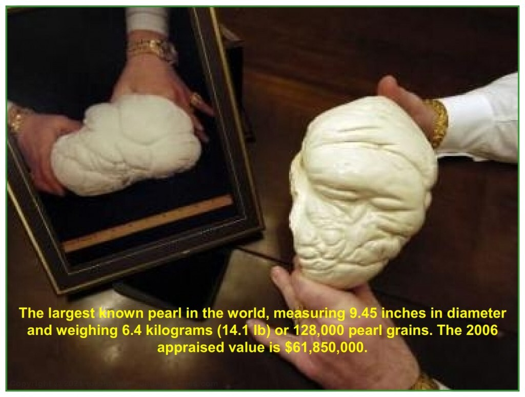 The largest pearl ever found weighs 14.1 pounds and is 9.45 inches in diameter