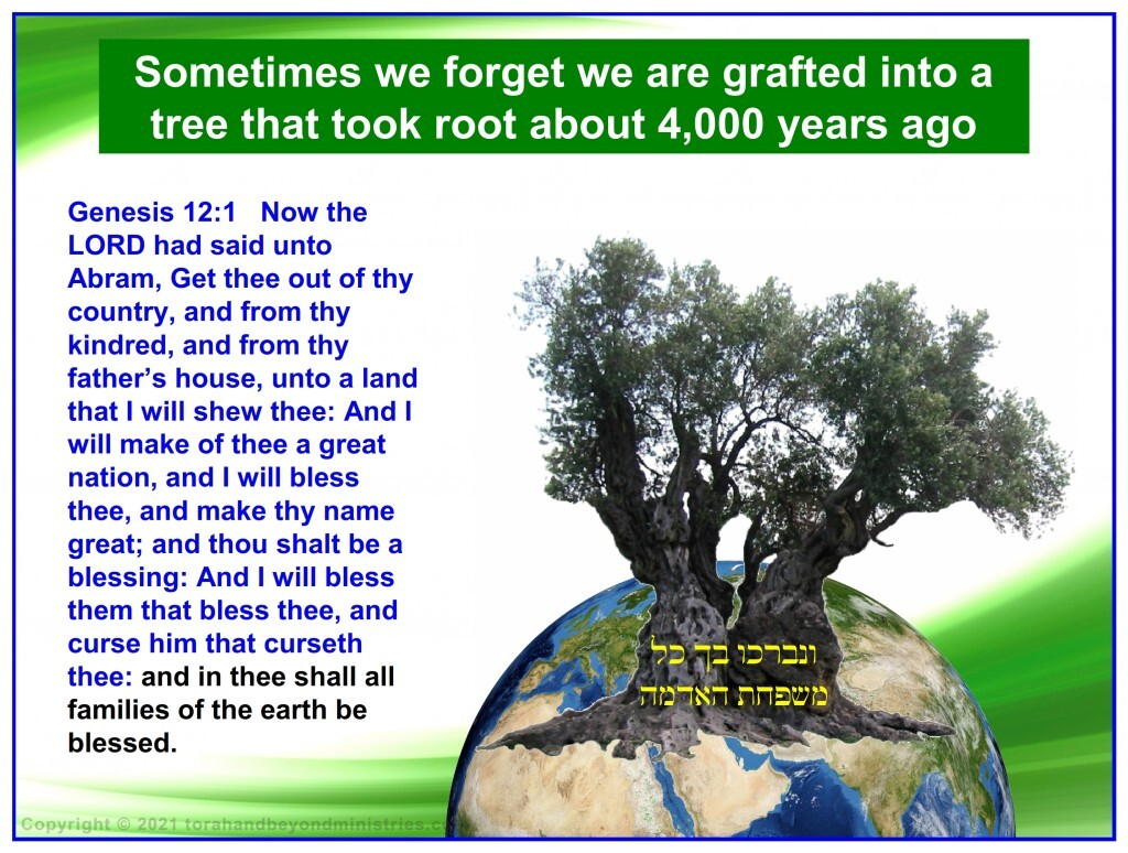 Gentiles can be grafted into the Good Olive Tree by accepting Jesus as their Messiah