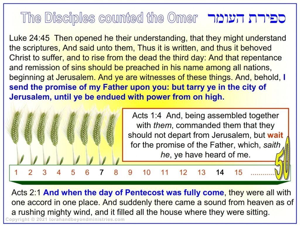 The Disciples knew how to count the days from the Feast of First Fruits to the Feast of Shavuot.