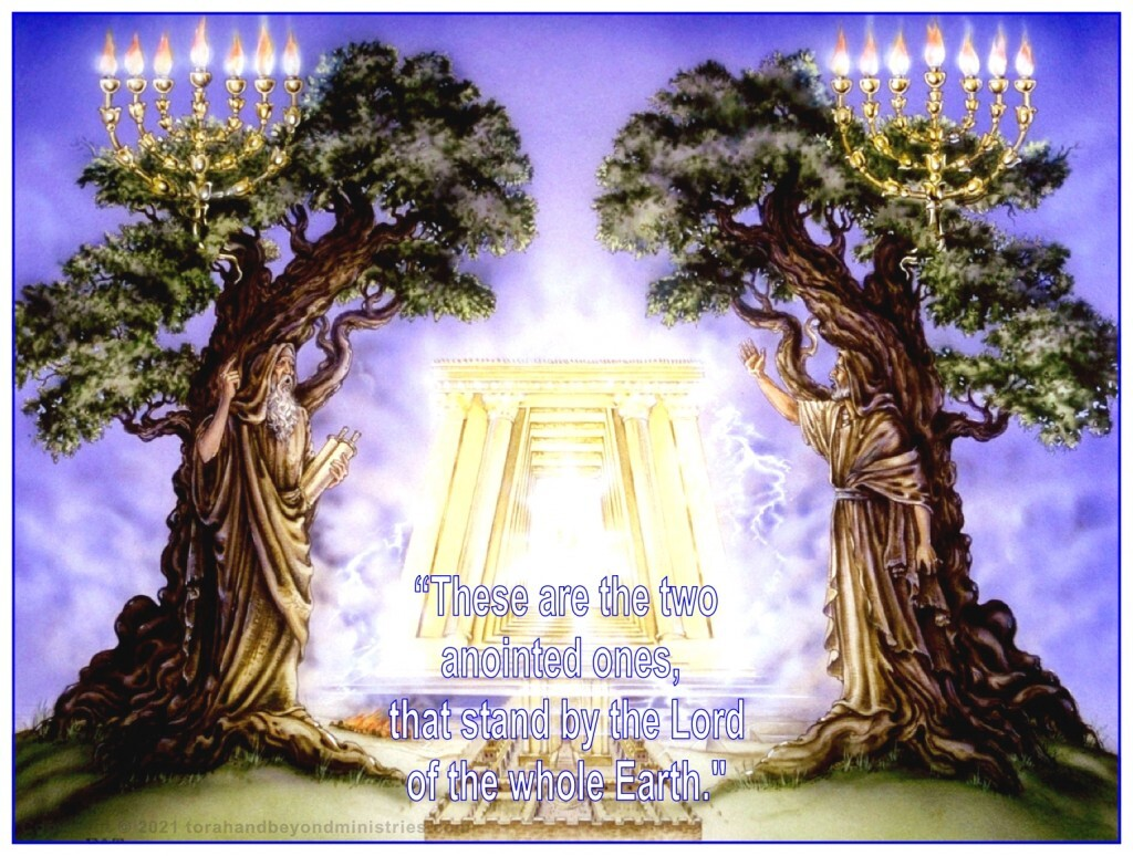The two witnesses of the Tribulation