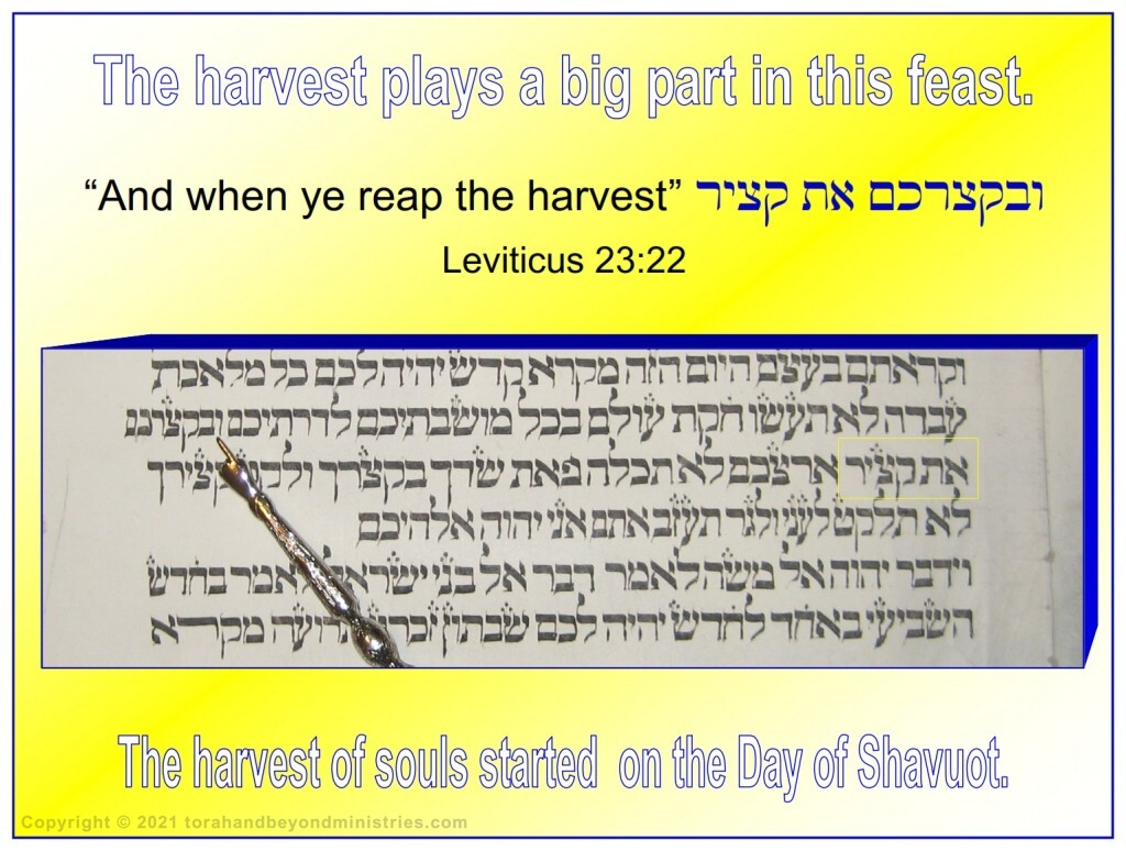 The harvest plays a big part in the feast of Shavuot, Pentecost.  The harvest of souls started on the day of Pentecost.
