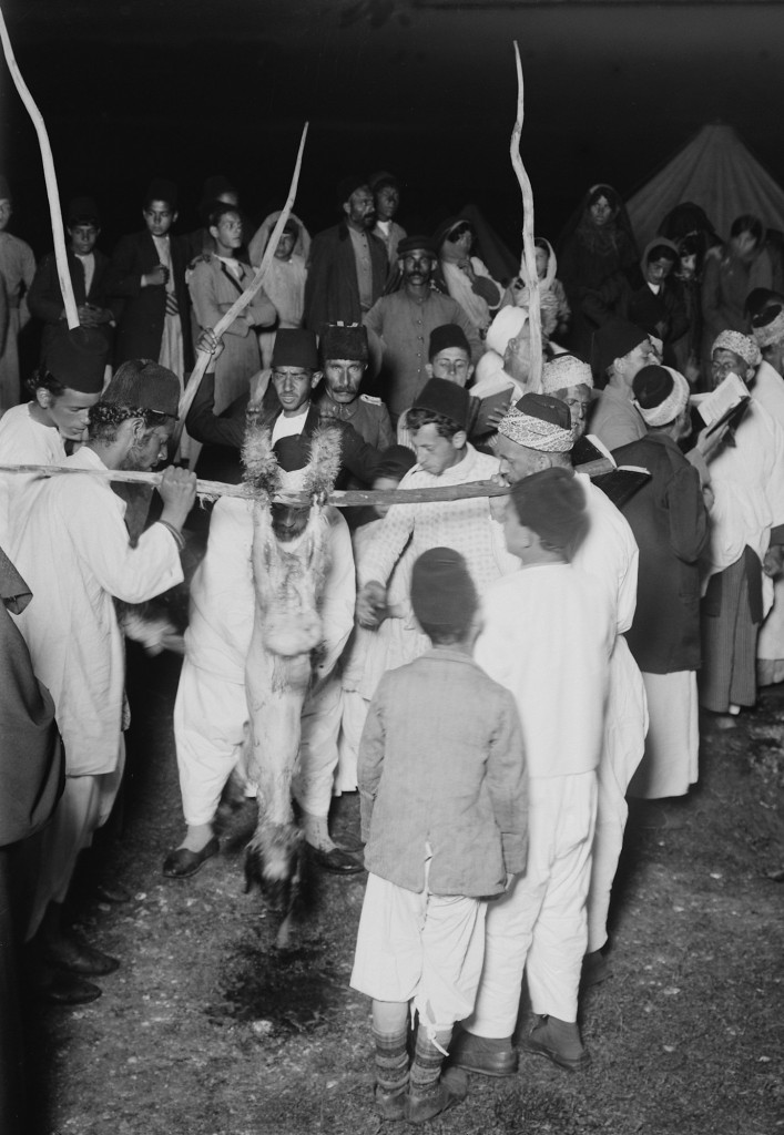Samaritan Passover, preparing carcass draining blood before roasting
