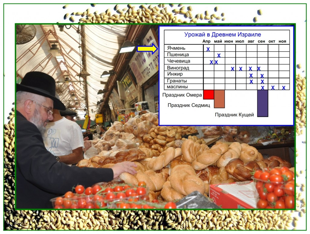 The harvest schedule in Israel showing correlation to the harvest and the Feasts of the Lord.
