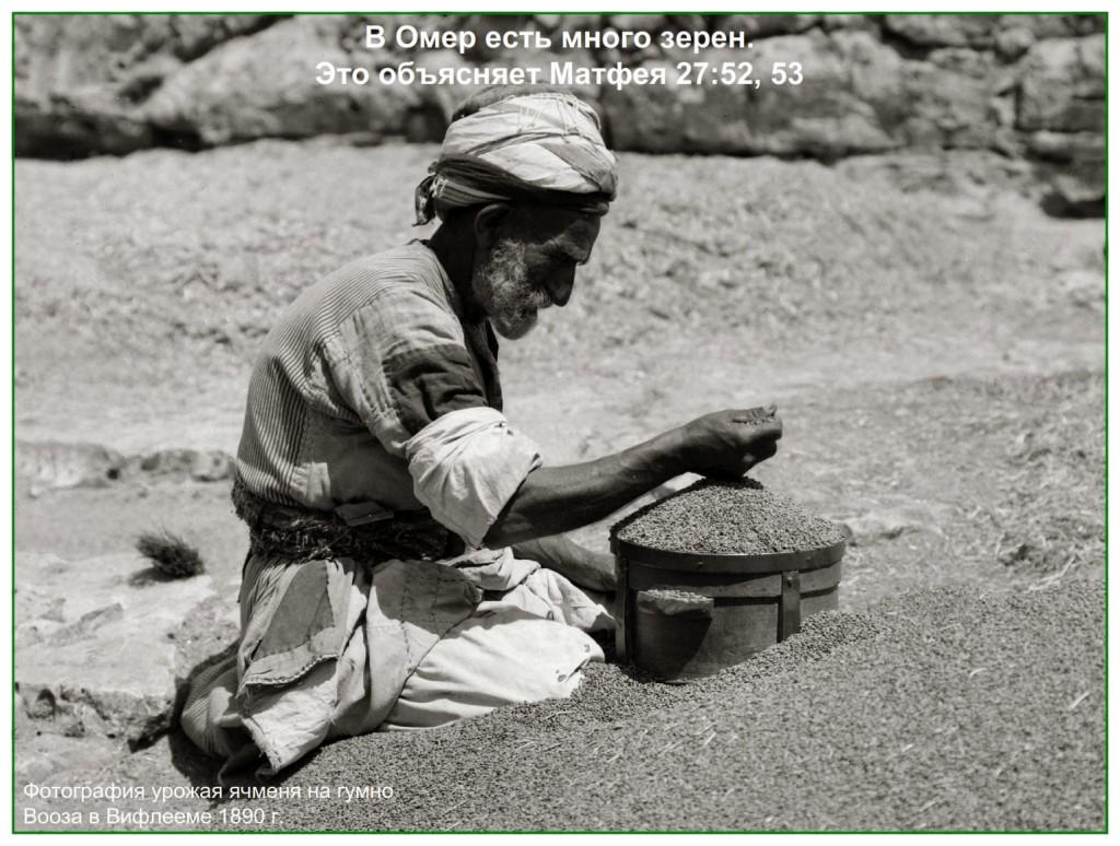 Threshed and winnowed, Clean grain at Boaz threshing floor at Bethlehem