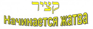 Russian language lesson: The harvest of Shavuot begins