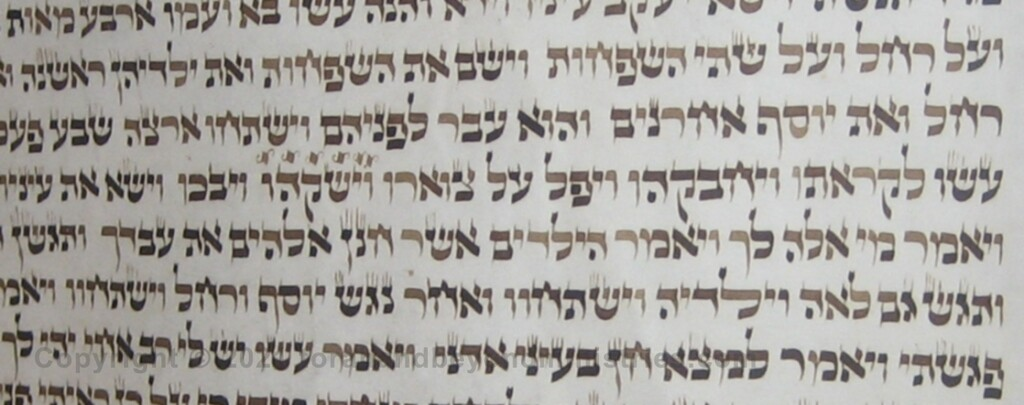 letters are becoming light on this Torah Scroll due to iron gall ink degradation