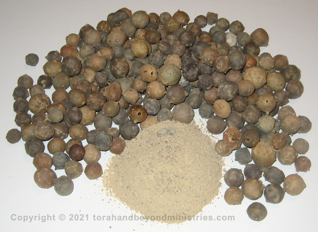 Oak Galls -Afeitzim are used for kosher ink used in writing the Torah