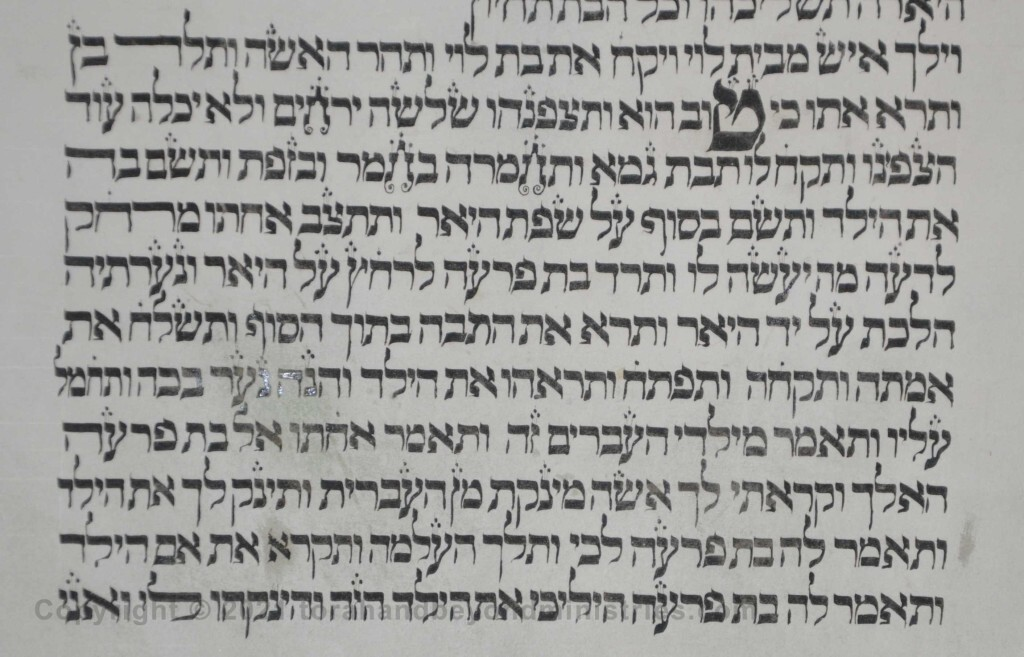 Sheet 12 Exodus 2 good - Torah from Lithuania written in the 16th century