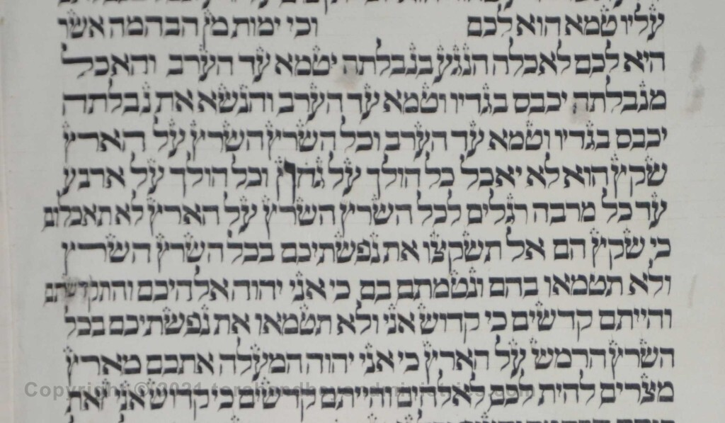 Sheet 26 Leviticus 11:42 Middle letter of the Torah - belly - Torah from Lithuania written in the 16th century