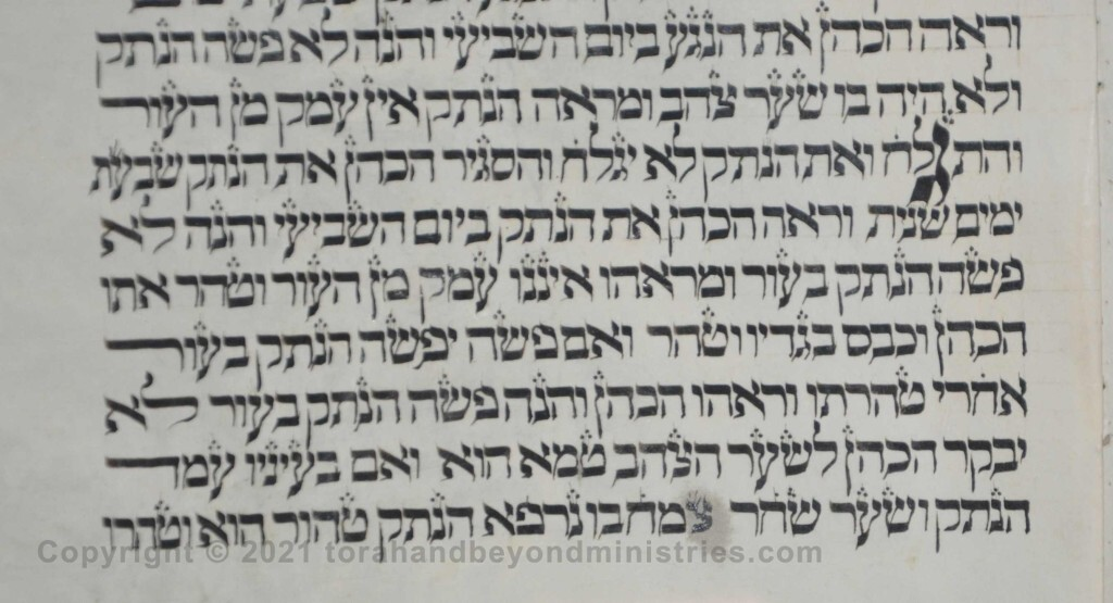 Sheet 28 Leviticus 13:33 he shall be shaven - Torah from Lithuania written in the 16th century