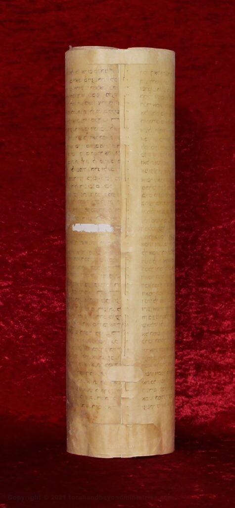 Hebrew scroll of Esther showing the backside of the Scroll which clearly shows it is parchment. The Scroll is 50 cm tall.