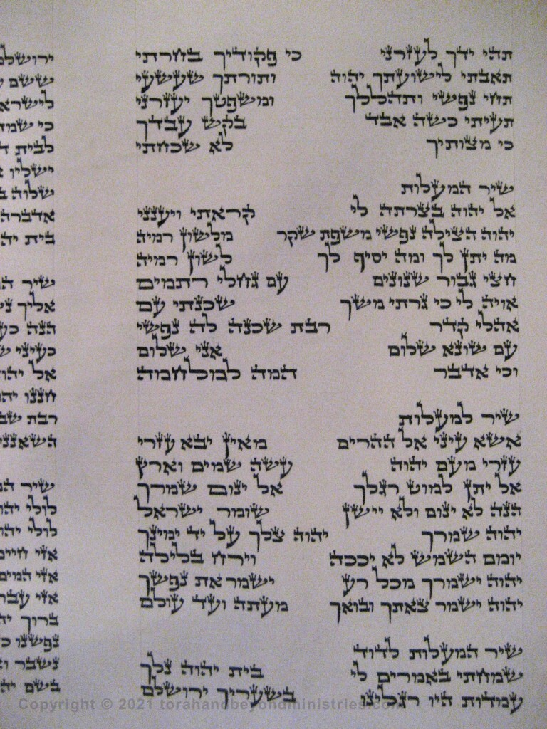 Photograph of the Scroll of Psalms showing Psalm 119 verses 173 through 176 showing the tav