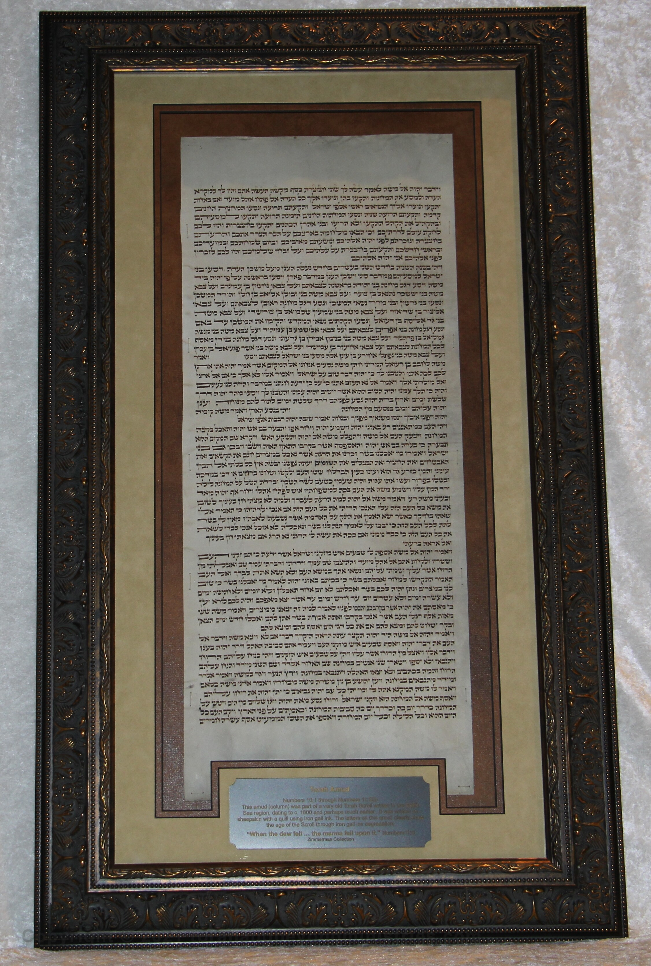 """Framed column from a very old Torah Scroll contains """"When the dew fell … the manna fell upon it"""" Numbers 10:1 to Numbers 11:32"""