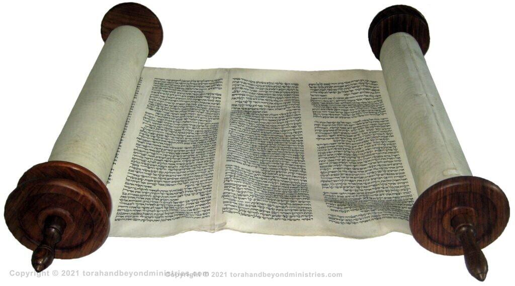 Vilna Torah Scroll open for viewing