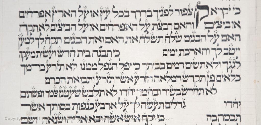 Vilna Torah Scribal oddities Deuteronomy 22 verse 6